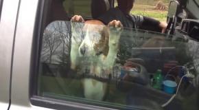 Собачка шла в комплекте к машине