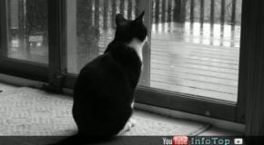 Важные факты о поведении кошек
