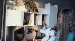Филин Ёль и кот породы Мейн-кун