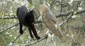 Удивительная дружба кота и совы
