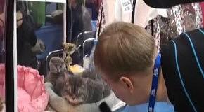 Выставка 100500 котиков