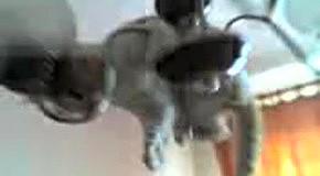 Кот катается на люстре