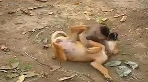 Обезьянка против щенка