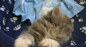 Котенок засыпает