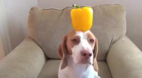Пес в съедобных шляпках