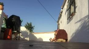Хозяин разыграл собаку