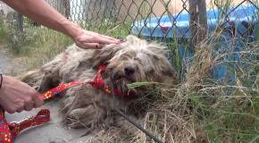 Чудесное преображение бездомного пса