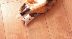 8 Лайфаков для кота