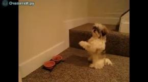 Собака молится перед едой