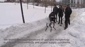 Робот сам научился ходить по льду и снегу