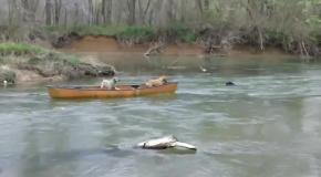 Собака спасла других собак