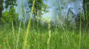 Сон на лужайке Старая Котельня, Житомирщина