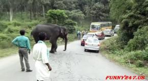 Слоны нападают на машины