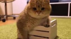 Кот, который очень хочет казаться меньше, чем есть