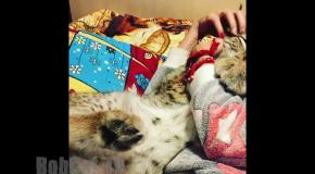 Самая уютная кошка!) The Most comfortable big cat ))