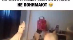 Попугай общается с котами