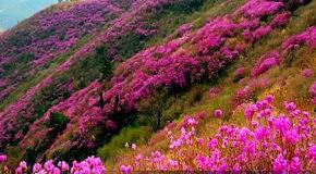 Весна в Корее
