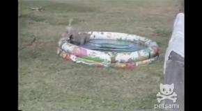 Щенок рыбачит в детском бассейне