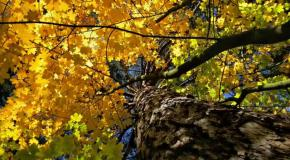 Осенний лес (слайд-шоу)