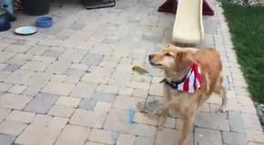 Пес, который не умеет ловить еду