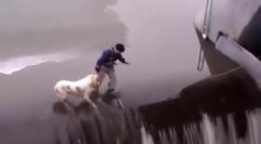Мужчина спасает собаку оказавшуюся в ловушке на протине