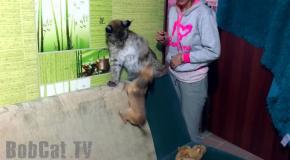 Бессмертная собака и большая кошка  Berserk Dog & Big Cat