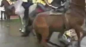 Осторожнее с лошадками