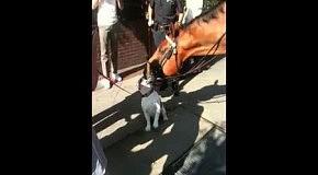 Лошадь влюблена в английского бульдога