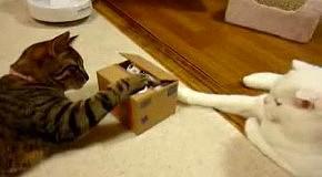 Кошаки и игрушка