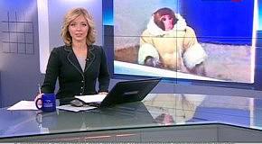 Магазин IKEA в Торонто посетила обезьяна в пальто
