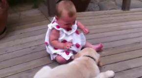 Щенок в восторге от своей маленькой хозяйки