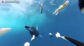 Скоростная рыба-парусник