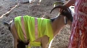 ДПС-коза