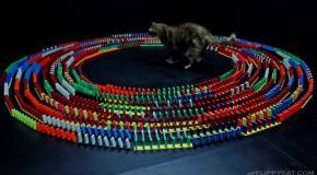 Лучшая игрушка для кота