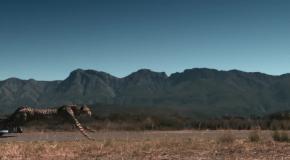 Кто кого: болид против гепарда