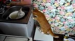 Кот и живая рыба