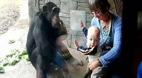 Обезьяна общается с малышом