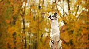 Умная собака Зои (Zoe)