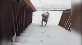Собака ненавидит снег