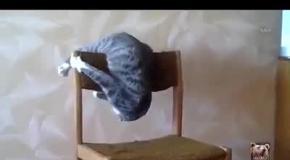 Кот не знает, как сидеть на стуле