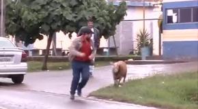 Сумасшедший козел-террорист из Бразилии