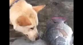 Собака спасает рыбу