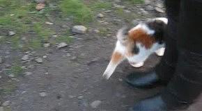 котька