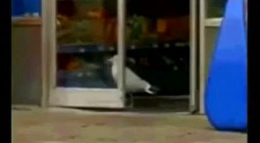 Чайка опять ворует