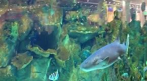 """Акула в """"Ocean Plaza"""" уже погибла"""