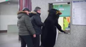 Пингвины спустились в метро