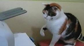 Кошак против принтера