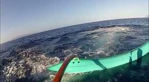На Гавайях кит протаранил лодку с туристами