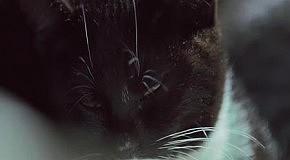 Котята хищники vs ниндзя