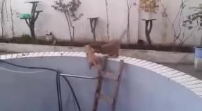 Кошка топит кота в бассейне.